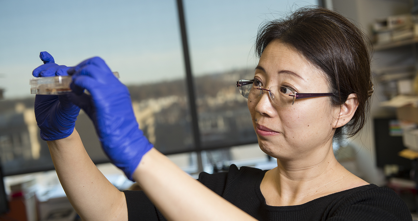 Cui in a black three-quarter length shirt and blue gloves holding up a Petri dish