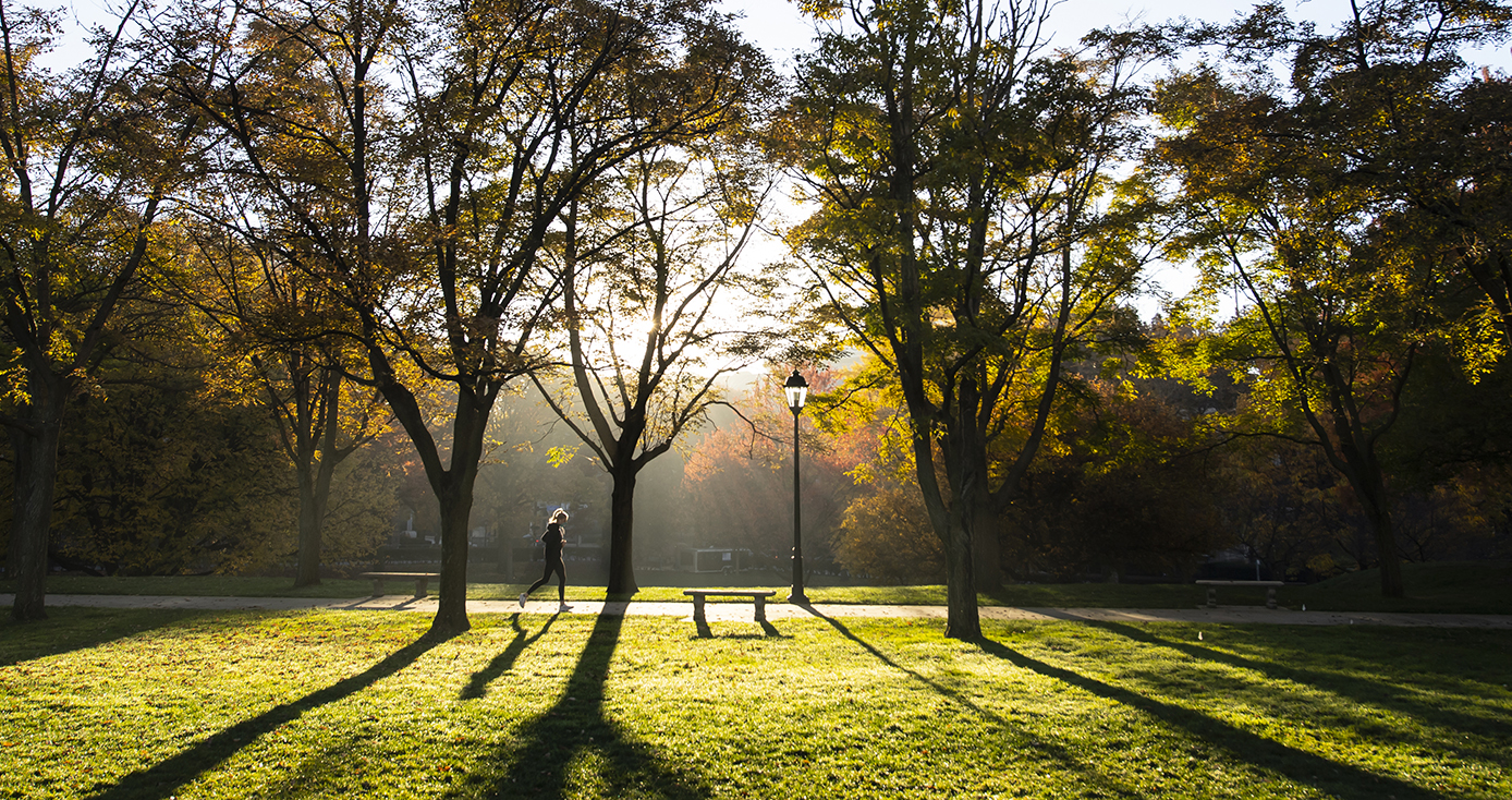 A park at sunrise, with light breaking through the trees