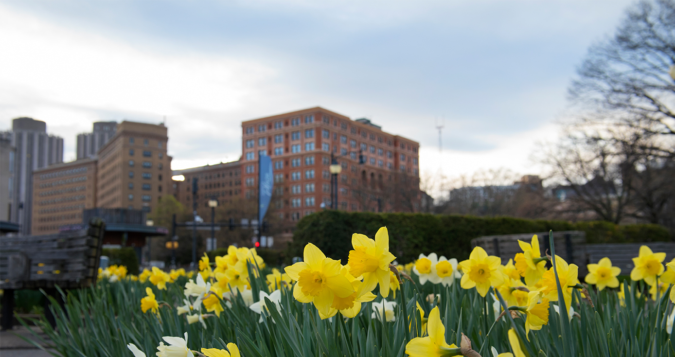 Buildings behind a row of yellow flowers
