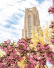 The Cathedral of Learning behind pink and yellow flowers