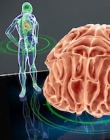 Virtual image of a human body and a brain