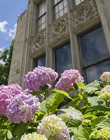 Side of the Cathedral of Learning with pink and white flowers