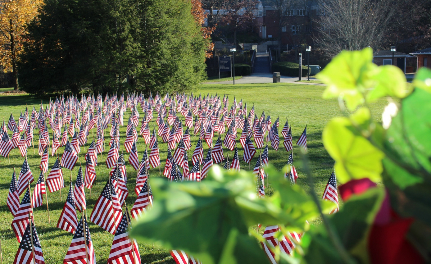a field of American flags posted in grass