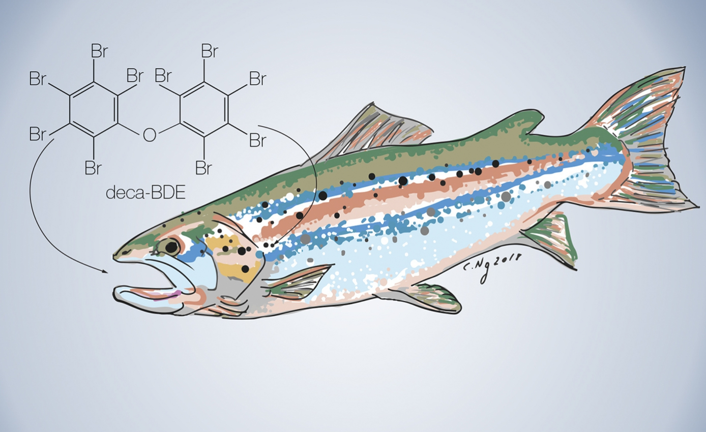 sketch of a fish with PBDE chemical structure next to it