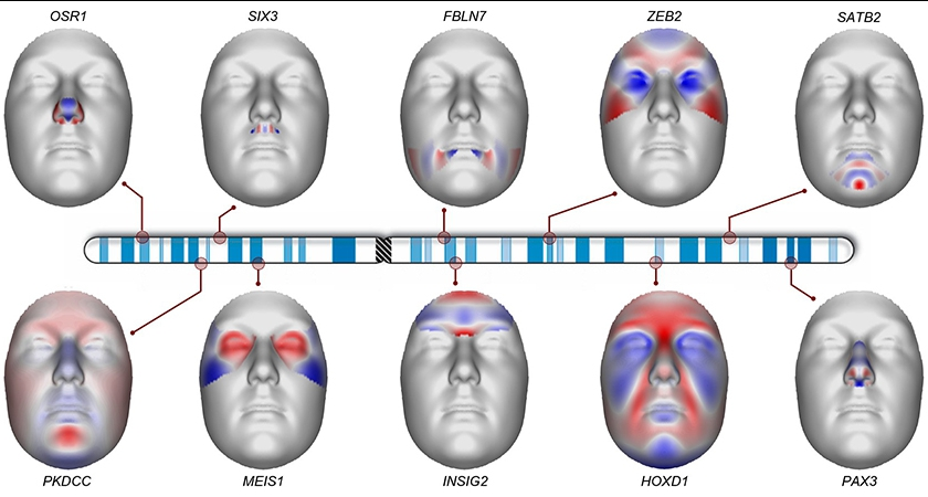 We Scanned the DNA of 8,000 People To See How Facial Features Are Controlled by Genes