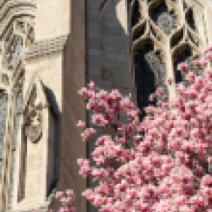 Heinz Chapel with pink flowers in the foreground