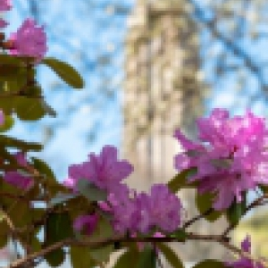 Image of the Cathedral of Learning with flowers in the front