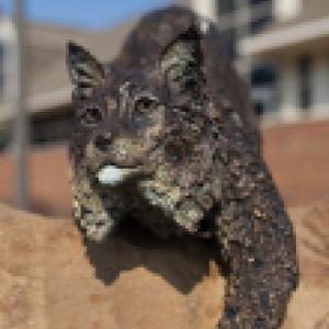 A bobcat statue
