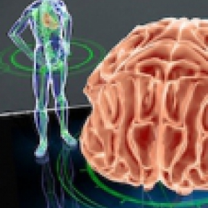 3D Model of a body and the human brain