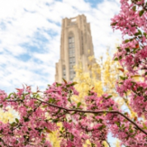 Bright pink flowers on a tree, with the Cathedral of Learning in the background