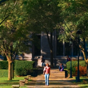tree-lined sidewalk near the Cathedral