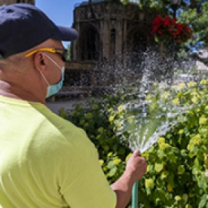 a man in a neon green shirt, mask and hat watering hydrangeas