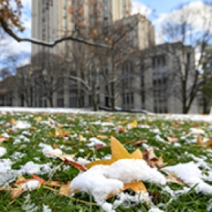A close up of leaves covered in snow in front of the Cathedral of Learning