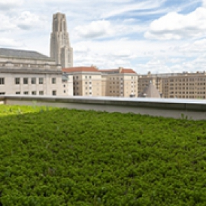 Mascaro Center green roof with the Cathedral of Learning in the distance