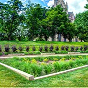 A rain garden with Heinz Memorial Chapel in the background