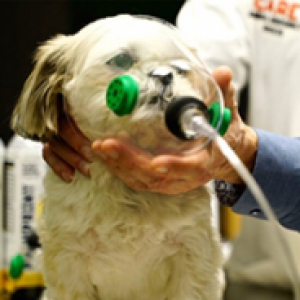 A small dog on a table, and a healthcare professional holding an oxygen mask to its face
